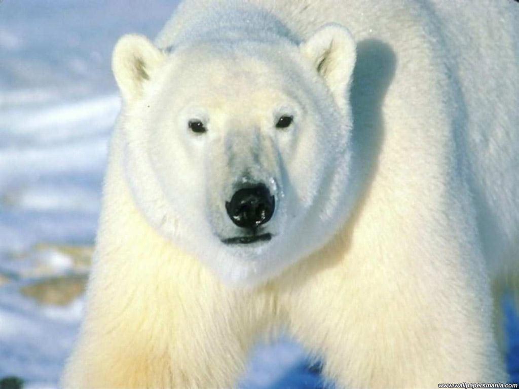 https://animalesenviadeextincion.blogia.com/upload/externo-d09728bd0efbe9e6be28964dcef70cd4.jpg
